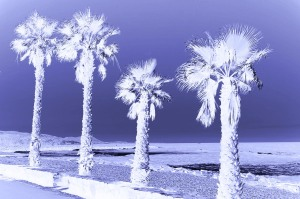 Palm Trees Frozen